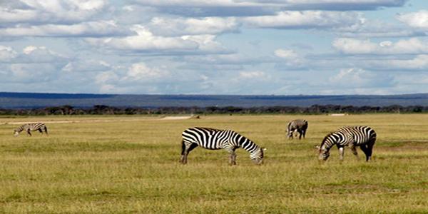 Ekosistem Pengertian Jenis Komponen Dan Contoh Ekosistem