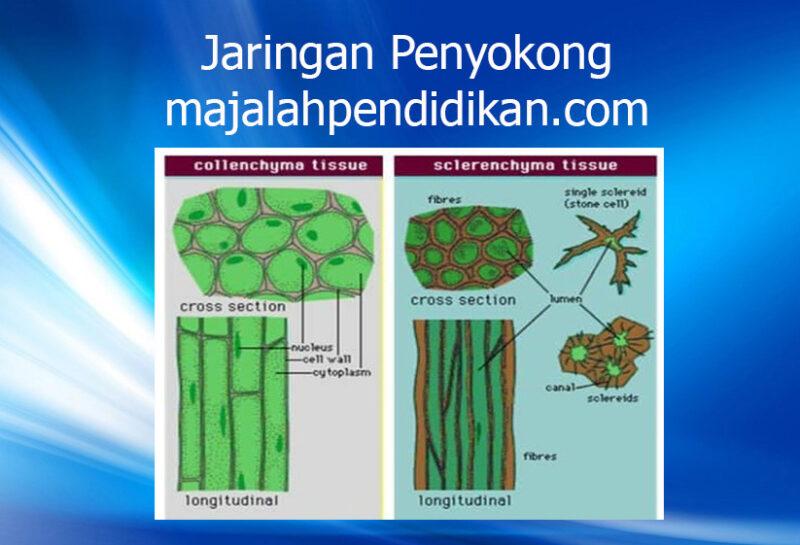 4 Jaringan Penyokong jaringan tumbuhan