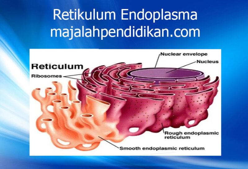6 Retikulum Endoplasma sel tumbuhan