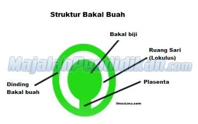 Bakal-Buah
