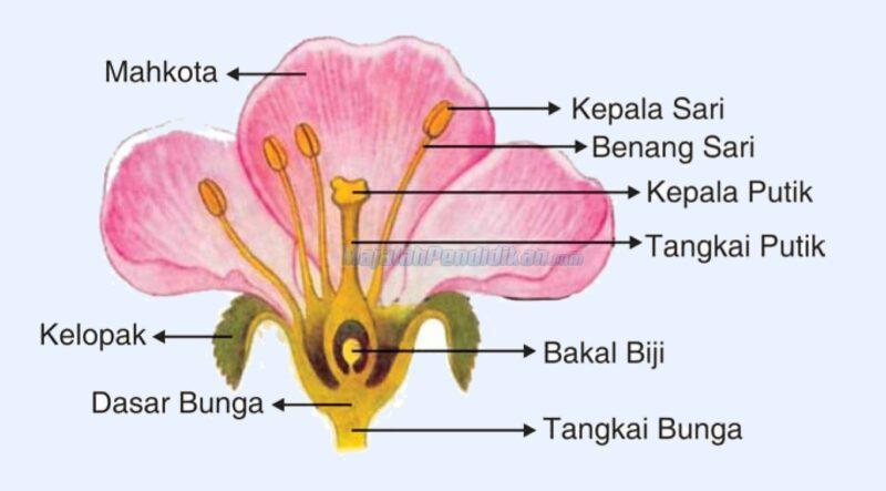 Bunga-Berdasarkan-Penyusunnya