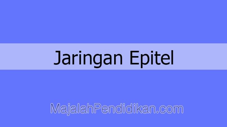 Jaringan Epitel - Pengertian, Ciri-Ciri, Fungsi, Jenis ...