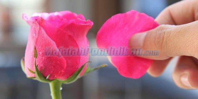 Kelopak-Bunga